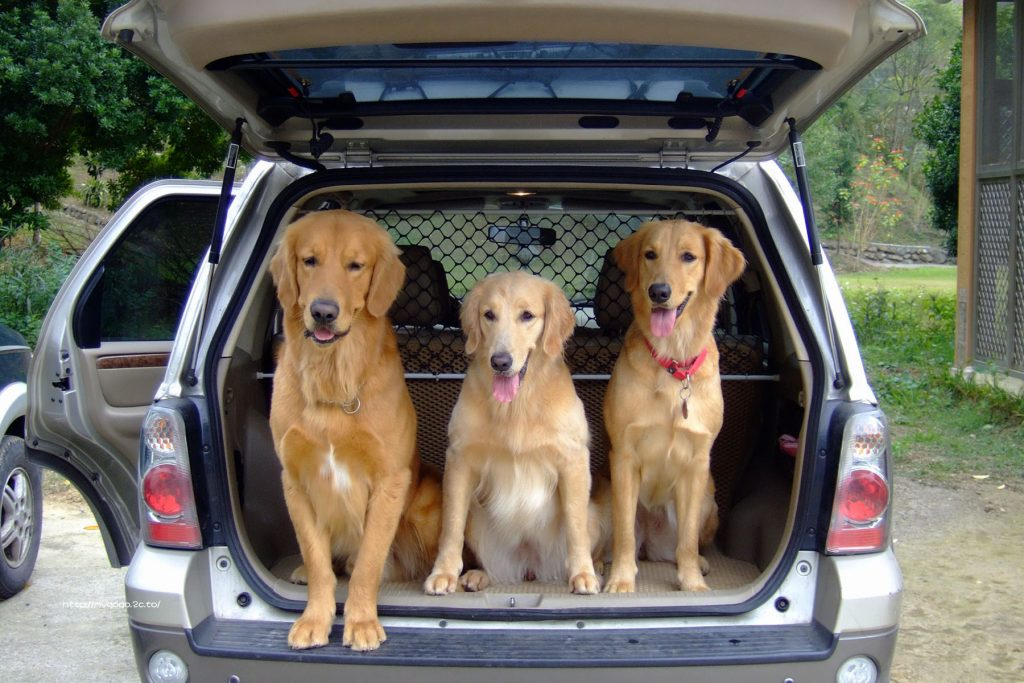 transportar-perro-coche